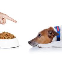 Perros que comen el pienso muy rápido. Consejos.