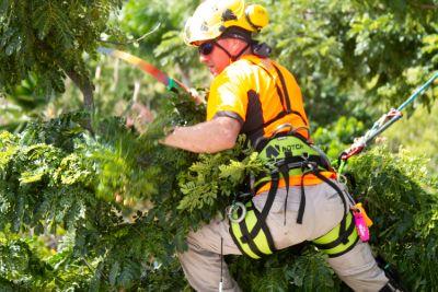 herramientas arboricultura